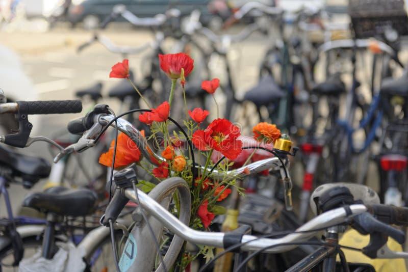 Blommor på cykeln i Amsterdam arkivbild
