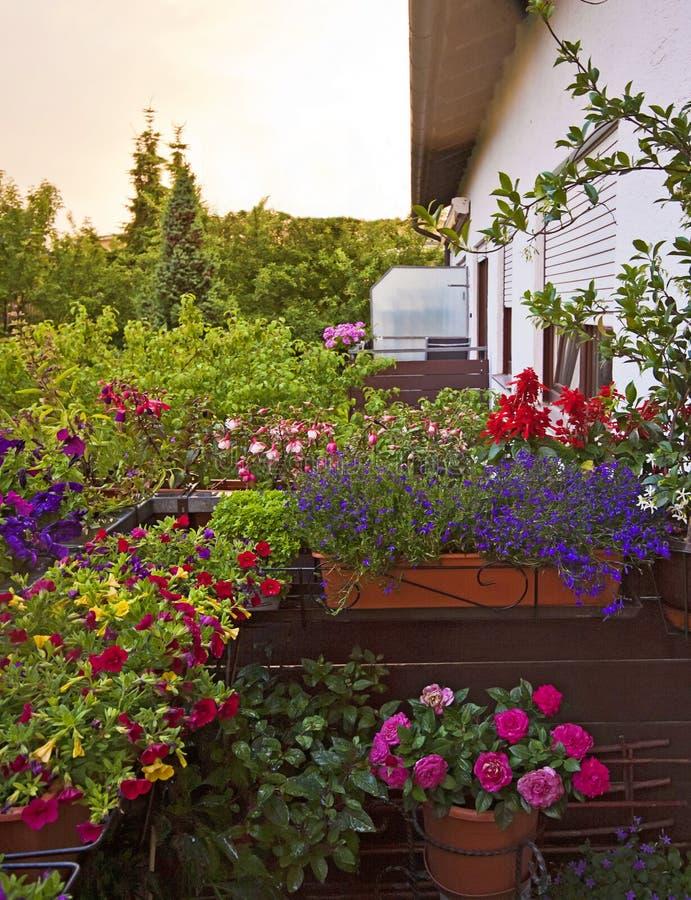 Blommor på den hem- balkongen arkivbilder
