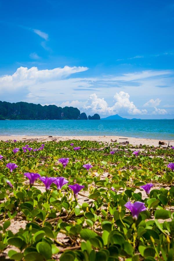 Blommor på den Krabi stranden, Thailand arkivfoto