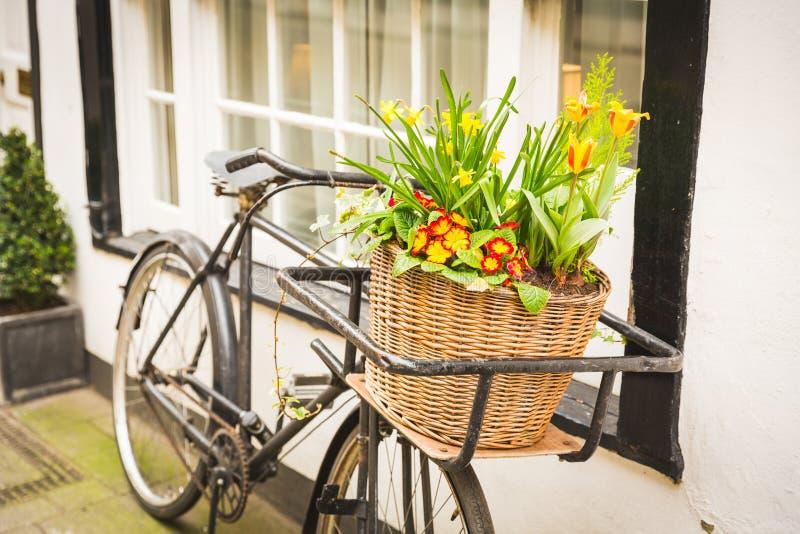 Blommor på en gammal cykelkorg bredvid ett fönster royaltyfria bilder