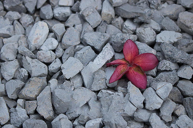 blommor på en röd kiselstengrå färg royaltyfria foton