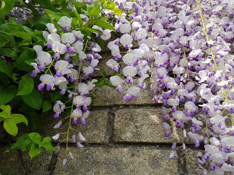 Blommor på en tegelsten fotografering för bildbyråer