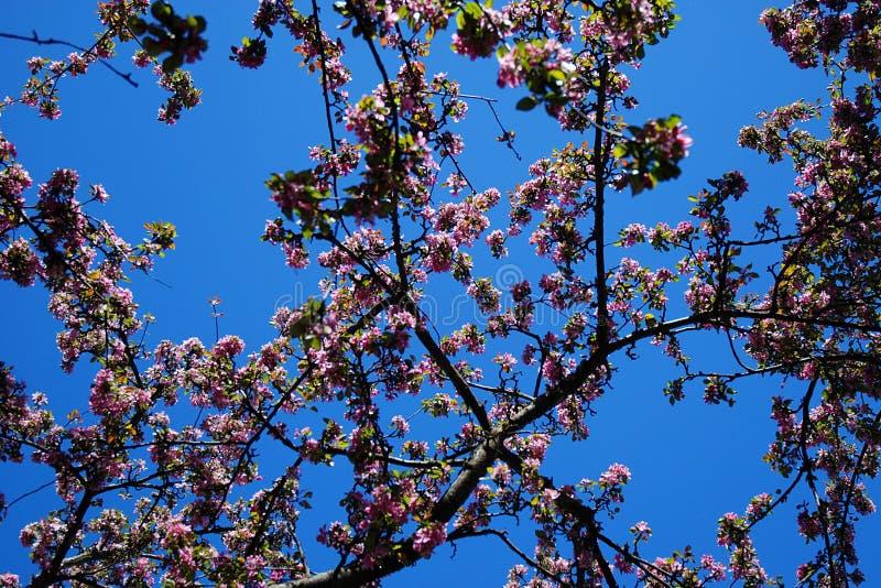 Blommor på en tree fotografering för bildbyråer