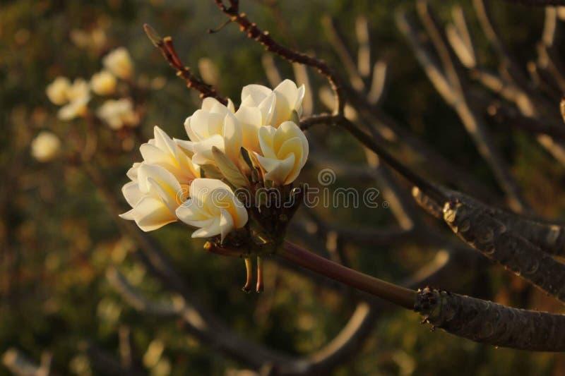 Blommor på en tree royaltyfria foton