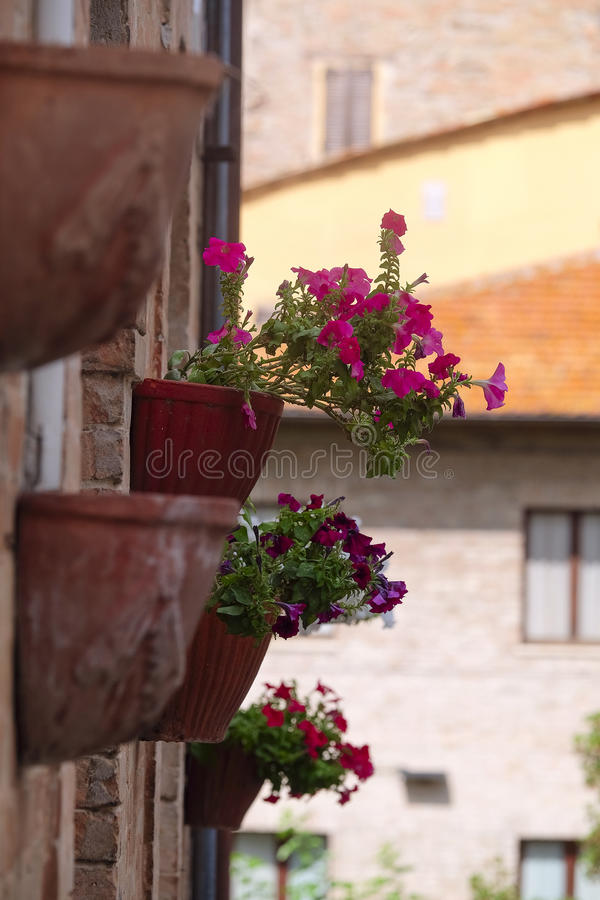 Blommor på en vägg av ett bebott hus fotografering för bildbyråer