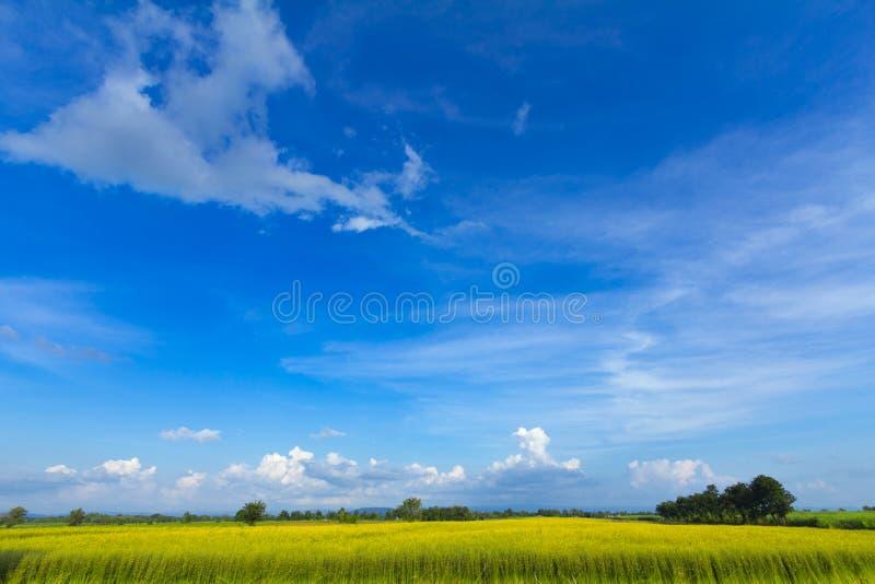 blommor på fält med blå himmel royaltyfria bilder