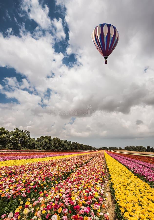 Blommor på fältet som planteras av färgband arkivfoto