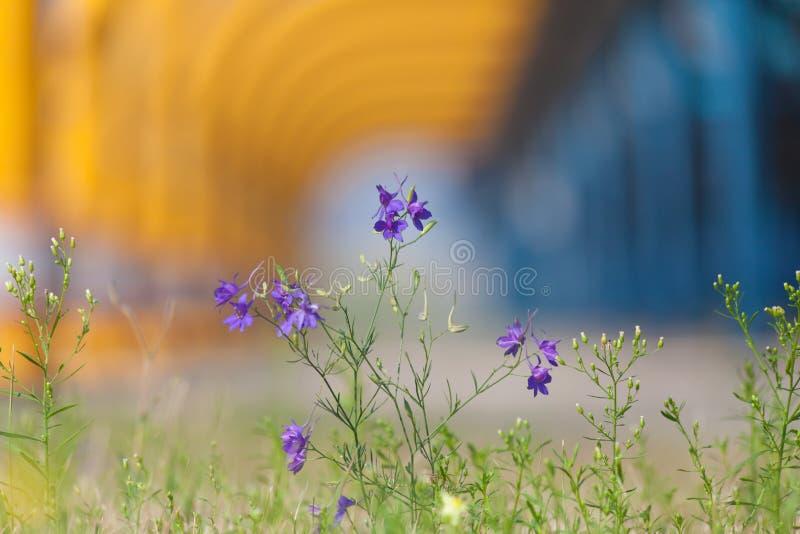 Blommor på industriell bakgrund royaltyfri fotografi