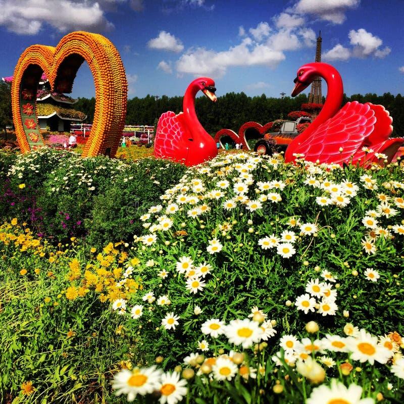 Blommor på mirakelträdgården royaltyfria foton