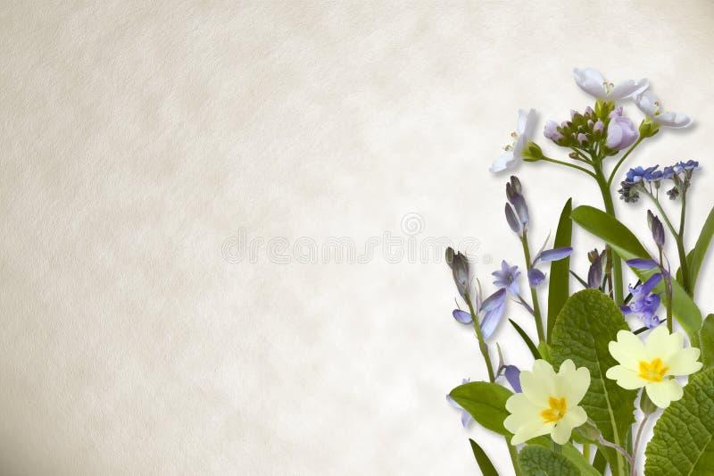 Blommor på pergamentbakgrund vektor illustrationer