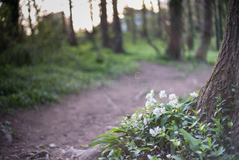 Blommor på skogsmarkvandringsledet royaltyfri foto