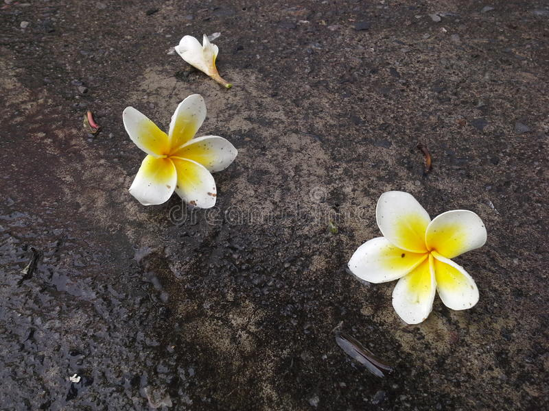 Blommor på vägen, Hadyai, Songkhla, Thailand arkivbilder