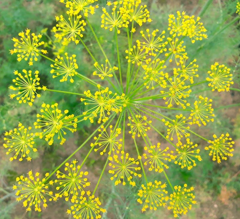 blommor påminner mig av mandalaprydnaden royaltyfri bild