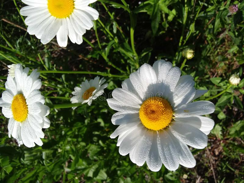 Blommor p? parkera royaltyfri fotografi