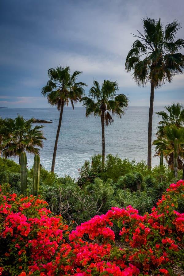 Blommor, palmträd och sikt av Stilla havet, på Heisler PA arkivbild