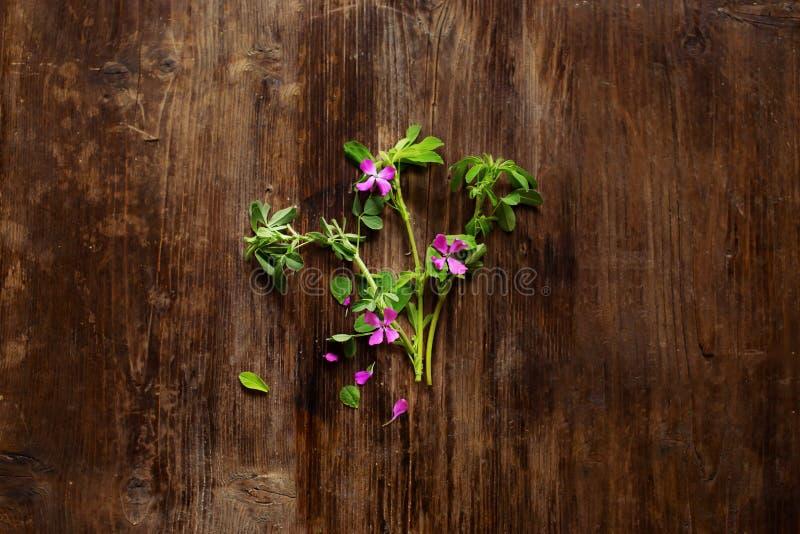 Blommor s?nker lekmanna- royaltyfri foto