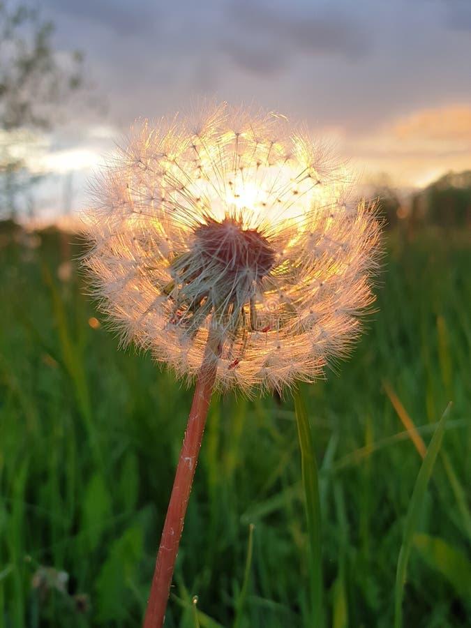 Blommor, sol och himmel royaltyfri bild