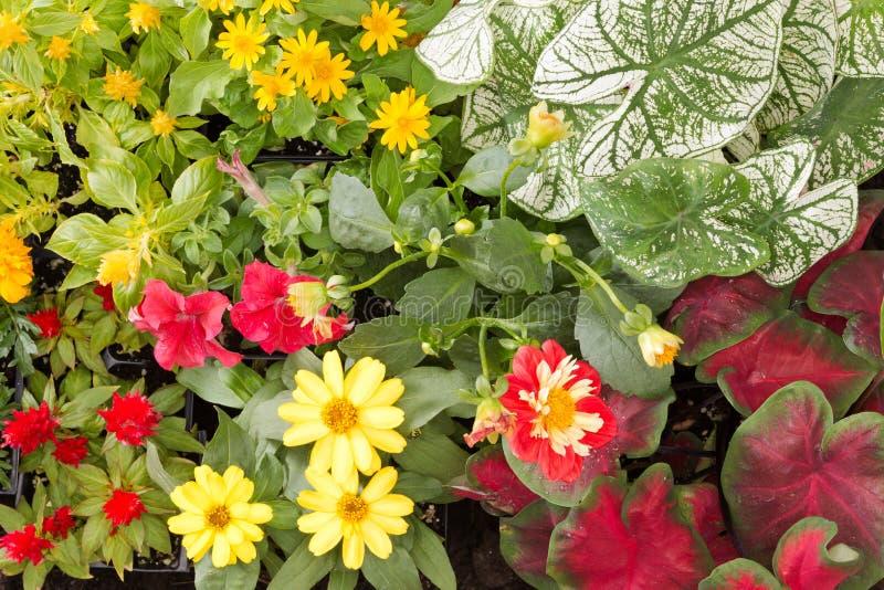 Blommor som är klara att planteras royaltyfria foton