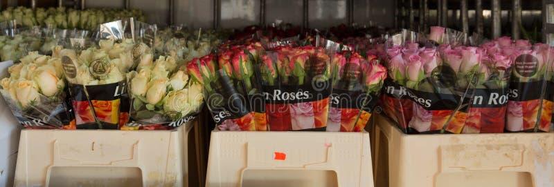 Blommor som är klara på auktionen att säljas royaltyfria bilder