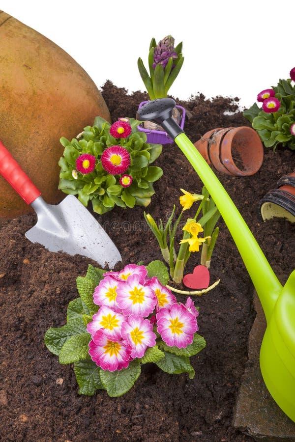 blommor som arbeta i trädgården plantera att bevattna arkivbilder