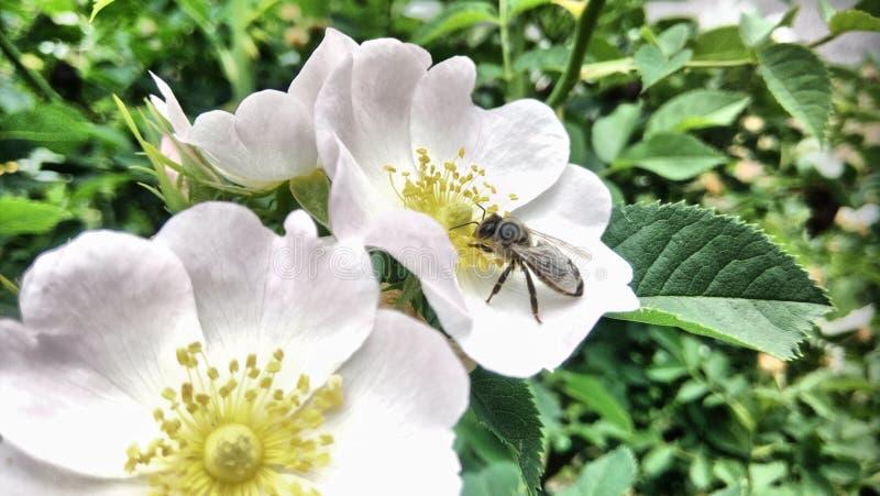 Blommor som blommar, och en ljus vårdag arkivbild