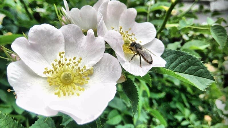Blommor som blommar, och en ljus vårdag royaltyfri bild