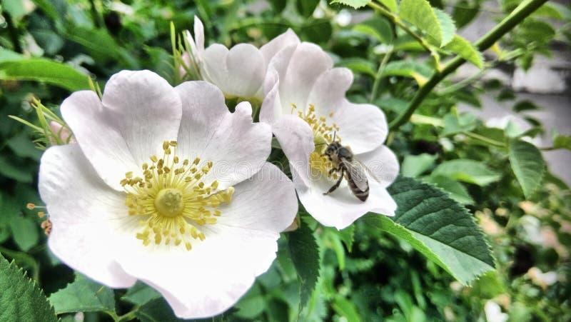 Blommor som blommar, och en ljus vårdag fotografering för bildbyråer