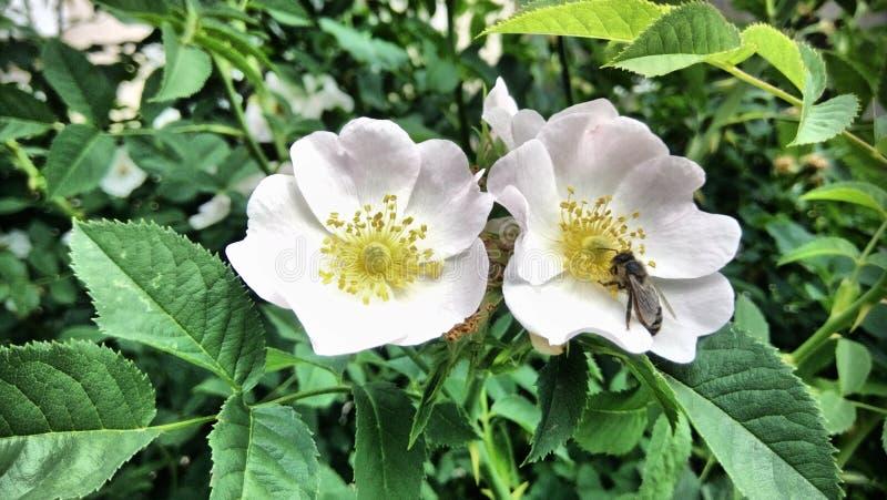 Blommor som blommar, och en ljus vårdag royaltyfria bilder