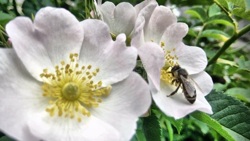 Blommor som blommar, och en ljus vårdag arkivfoto