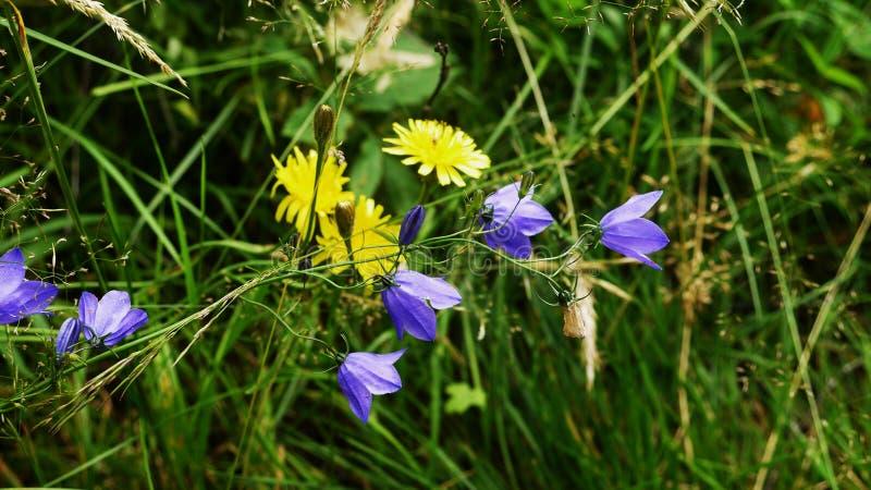 Blommor som du har en gång missa på din väg royaltyfri bild