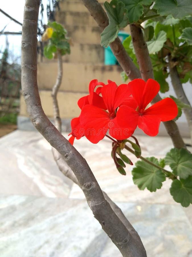 Blommor som förbluffar fotoet arkivbild