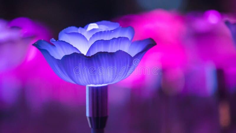 Blommor som skapar härligt ljus arkivbild
