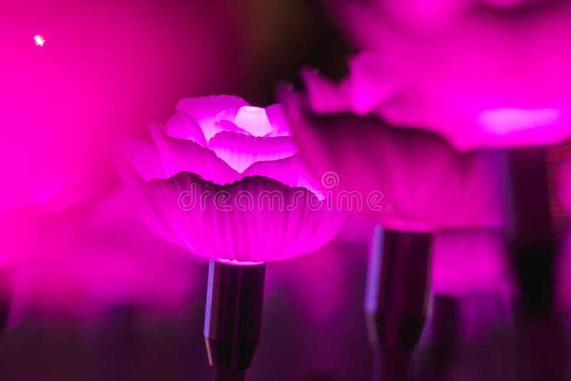 Blommor som skapar härligt ljus fotografering för bildbyråer