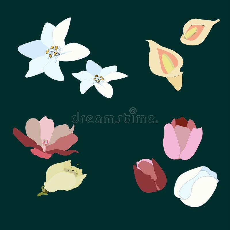 blommor som ställs in fjäder royaltyfri illustrationer