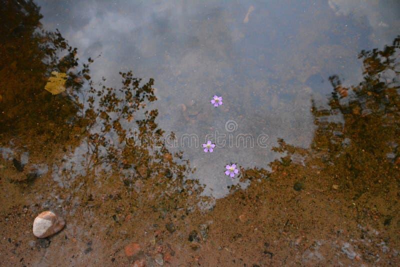 Blommor som svävar i vattnet royaltyfri foto