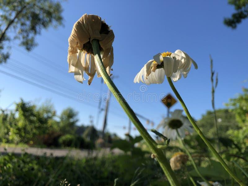 Blommor som torkar i solen royaltyfri fotografi