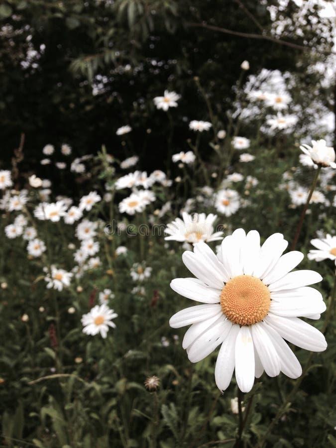 Blommor stänger sig royaltyfri bild