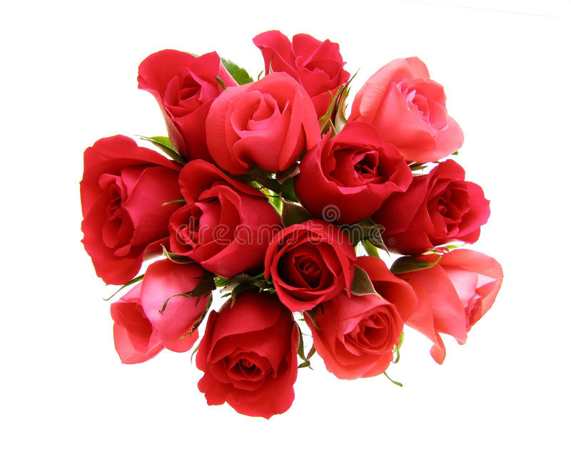 blommor steg royaltyfri foto