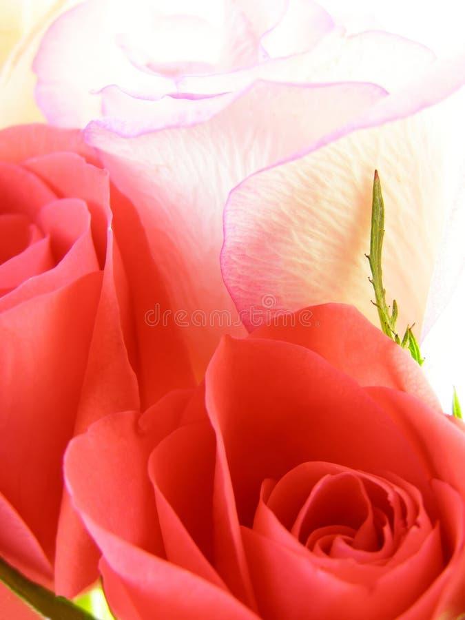 blommor steg arkivbild
