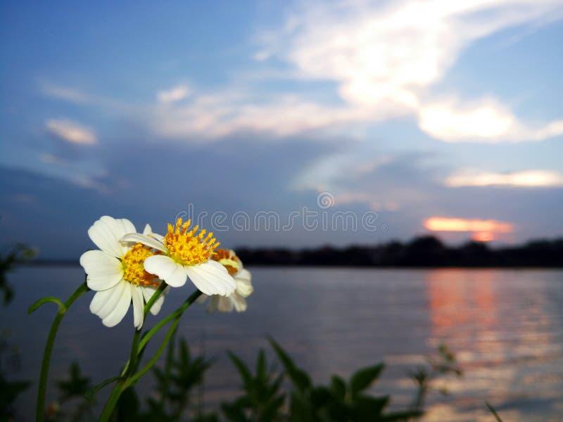 Blommor under solnedgång royaltyfria foton