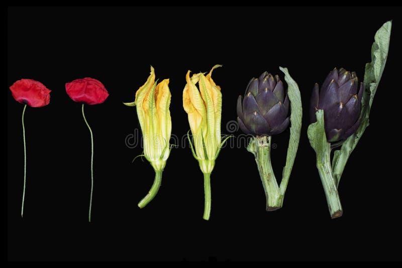 Blommor vallmo, pumpablommor, kronärtskockor royaltyfria foton