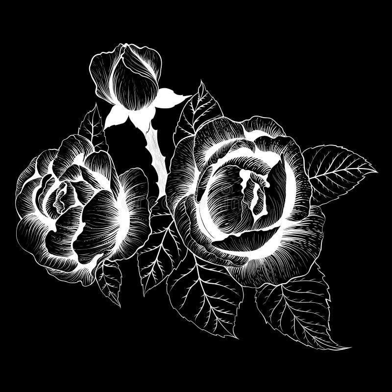 Blommor vektor En filial av rosor med sidor, blommor och knoppar Collage av blommor och sidor på på svart bakgrund stock illustrationer