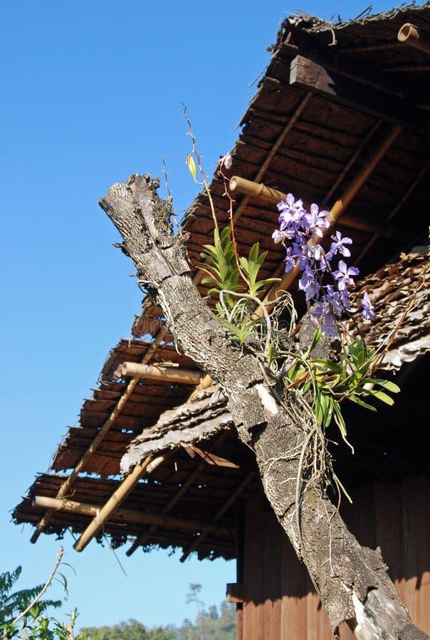 Blommor - vita Karen Tribal Village, Mae Hong Son, Thailand arkivbilder