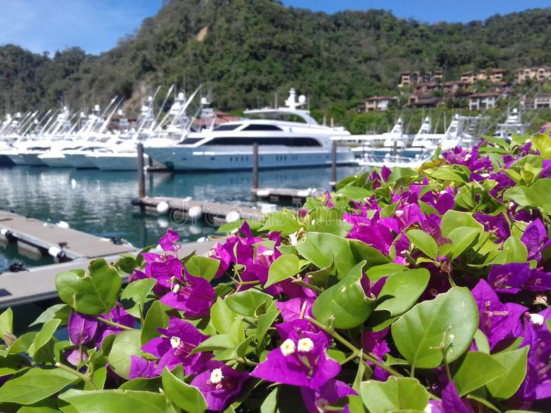 Blommor, yacht och strand royaltyfri fotografi