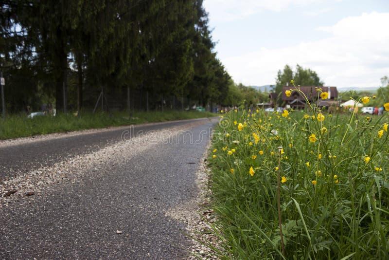 Blommorna blommar nära den stenlade vägen, parkerar slovakiska Paradise, bakgrund royaltyfri foto