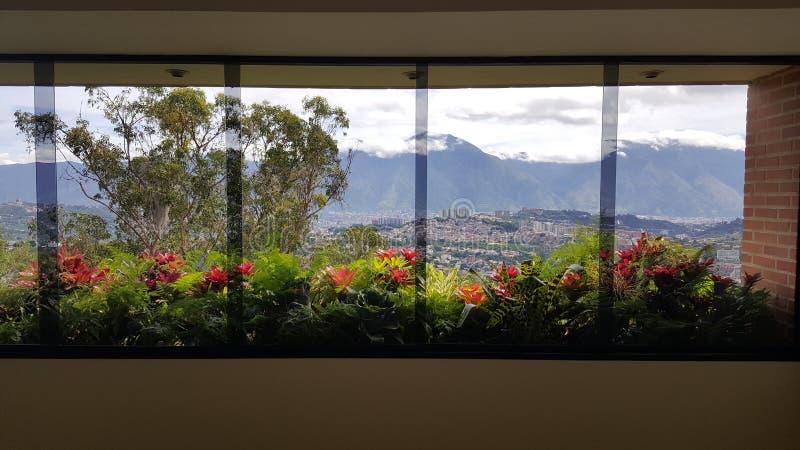 Blommorna i min Windows royaltyfria bilder