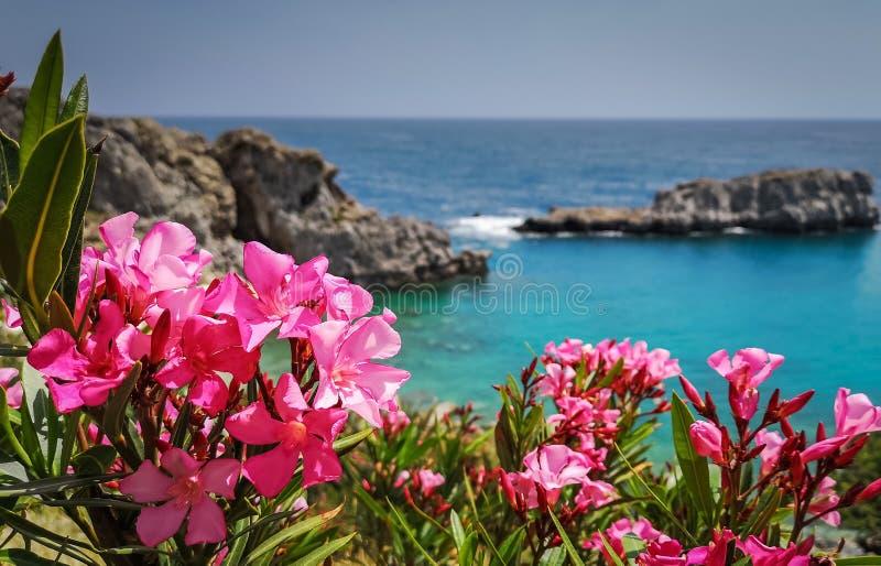 blommorna och det magiska havet av denna ö en ultimat destination för semester i den historiska byn arkivbilder