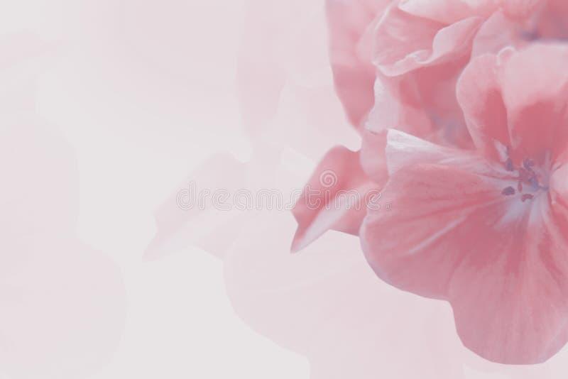 Blomning av äppleträdet Vårbakgrund av att blomma blommor Vita och rosa blommor Härlig naturplats med a arkivfoto
