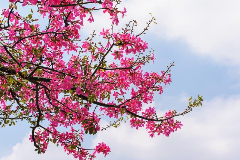 Blomning av det siden- trädet för Floss royaltyfri bild