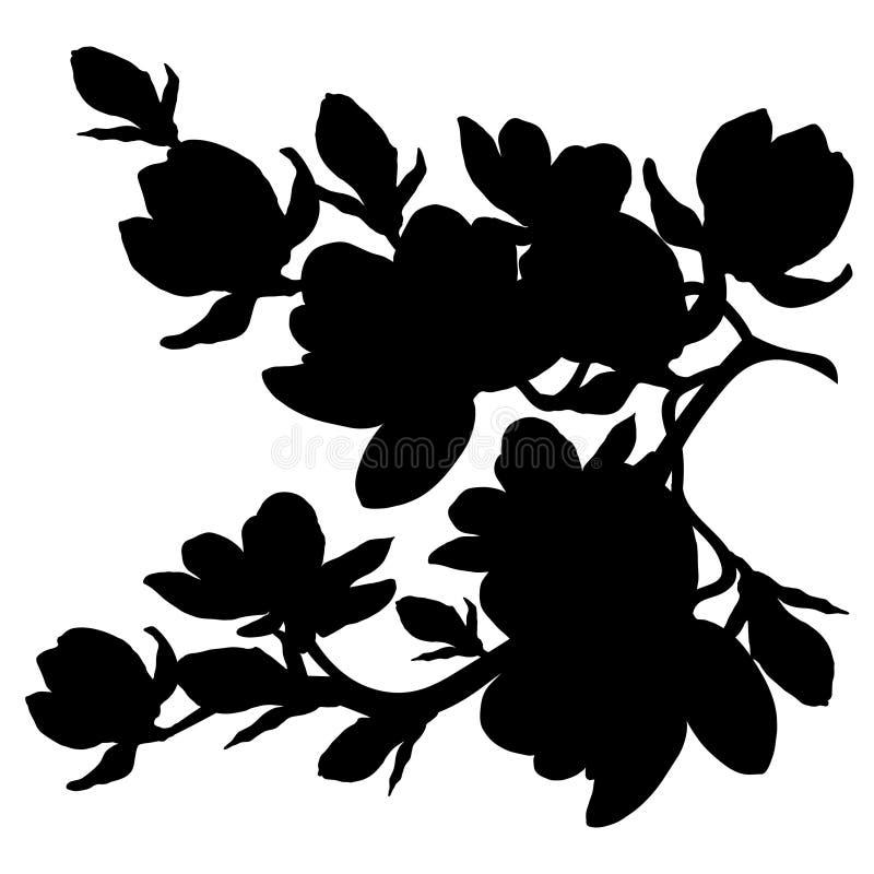 Blomning för blomma för konturfilialmagnolia också vektor för coreldrawillustration royaltyfri illustrationer